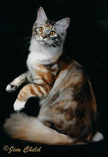 Mercedes North Haven >> ~Shubacoons Maine Coons - Gallery of Champions - Page Two~